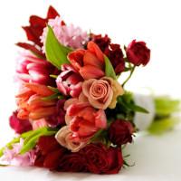 Trends and Seasonal Flowers