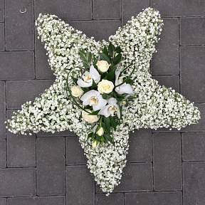 Gypsophilia star